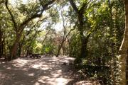 Side view of sandy site three showing live oak trees, picnic table, lantern post, and wooden railings nestled under shady maritime hammock in Anastasia State Park.