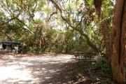 Side view of sandy site five showing live oak tree and picnic table nestled under shady maritime hammock in Anastasia State Park.