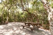 Side view of sandy site ten showing picnic table, electric hookup and wooden railings nestled under shady maritime hammock in Anastasia State Park.