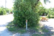 Photo: Buttonwood: Site number post with white number and arrow on a brown background, bushes, road and fence in background.