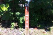 Photo: Buttonwood: Campsite numbers displayed on a post with seagrape leaves in the background.