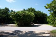 Photo: Buttonwood: Paved road with two empty campsites in background and bushes around sites