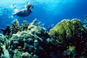 Photo: JOHN PENNEKAMP CORAL REEF SP. Blonde female snorkeler in red swimsuit wearing mask, snorkel and fins, glides through blue ocean waters above corals in shades of green and brown, with small yellow fish in foreground and light from surface above