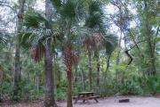 This photo highlights a beautiful cabbage palm in the site that sits right next to the picnic table.