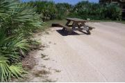 Campsite with palmetto plants as buffer on left side and wooden beach overlook on right side. Picnic table and grill on left side.