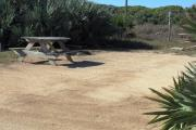 Packed sand campsite with palmetto plants along the back and left side. Picnic table and ground grill off to the left of the campsite. Palmetto plants on other side of fence provide a buffer to the back.