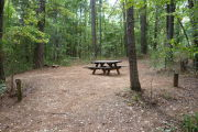 Primitive campground covered in pine straw with picnic table and fire ring. Tents only.