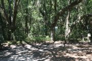 Picture of campsite boarder backed by oak and cedar forest