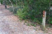 Close up of a brown site marker with an arrow on a wooden post. The foreground is sandy and there is dense vegetation to the left of the sign.