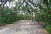 View of a vacant campsite with a picnic table, fire ring, electric pedestal, and water spigot. The main part of the site is sandy and is surrounded by trees on both sides that arch over the site creating a canopy and complete shade.