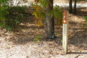 Close up of a brown site marker with an arrow on a wooden post. Sand and leaves are in the foreground and there is a medium sized tree to the left of the post. Two small trees and a few bushes are scattered in the background.