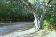 View of a vacant campsite with a picnic table, fire ring, and electric pedestal. There is a large tree on the right side of the entrance. The main part of the site is sandy with large areas of grass. The back of the site is densely forested and there is complete shade.