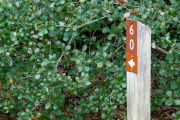 Close up of a brown site marker with an arrow on a wooden post. There is a dark green bush in the background.