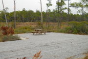 Side view of site with picnic table and fire ring in the background. Site is surrounded by native plants. Salt marsh in the background with pine trees behind the marsh.