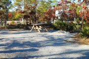 Side view of the site showing the picnic table and fire ring surrounded by native plants and trees.