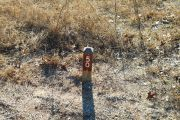 Campsite wood post with #50 metal sign surrounded by native grass.