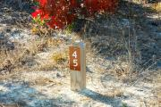 Campsite wood post with #45 metal sign surrounded by native vegetation.