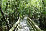 A wooden bridge, called a boardwalk, stretches out in front of you framed by the sun-dappled greenery of a cypress swamp.