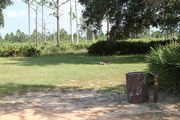 Grassy campsite with a fire ring surrounded by pine trees and saw palmettos.