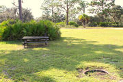 Grassy campsite with a picnic table and fire ring surrounded by pine trees and saw palmettos.