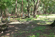 Shady campsite with a fire ring and picnic table amongst large oak trees.