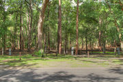 Partially sunny campsite with a fire ring, picnic table, and asphalt road amongst large oak trees.
