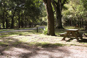 Partially shaded campsite with a picnic table and asphalt road amongst large oak trees.