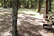 Shaded campsite with a fire ring and picnic table amongst large oak trees.