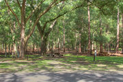 Shaded campsite with a picnic table and asphalt road amongst large oak trees.