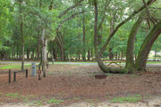 Shaded campsite with a fire ring and beautiful oak trees and pine trees.