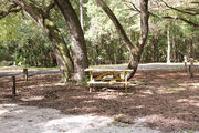 Shaded campsite with a picnic table surrounded by beautiful oak trees and pine trees.