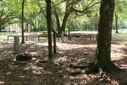 Shaded campsite with a fire ring surrounded by beautiful oak trees and pine trees.