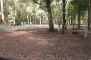 Shaded campsite with a fire ring, asphalt road, and beautiful oak trees and pine trees.
