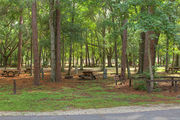 Shaded campsite with a picnic table and fire ring surrounded by beautiful oak trees and pine trees.