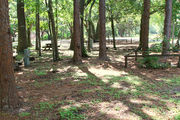 Shaded campsite with beautiful oak trees and pine trees surrounding it.