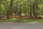 Shaded campsite with a picnic table surrounded by an asphalt road and beautiful oak trees and pine trees.
