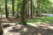 Shaded campsite with a fire ring, surrounded by beautiful oak trees and pine trees.