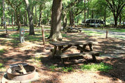 Shaded campsite with a picnic table and fire ring, next to an asphalt road and surrounded by beautiful oak trees and pine trees.