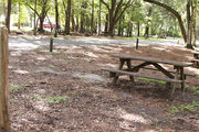 Shaded campsite with a picnic table, next to an asphalt road and surrounded by beautiful oak trees and pine trees.