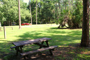 Grass filled campsite with a picnic table, sheltered by large trees.