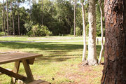Sunny campsite with a picnic table and woodland backdrop.