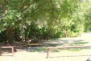 Large campsite with a picnic table and fire ring, shaded by a large oak tree.