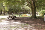 Large campsite with a picnic table and large oak tree.