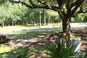 Shaded campsite with a picnic table and fire ring, surrounded by trees and palmettos.