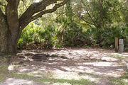 Shaded campsite with a fire ring, surrounded by trees and palmettos.