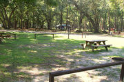 Shaded campsite with a picnic table and fire ring.