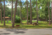 Campsite amongst the slash pines with a picnic table and near a restroom.