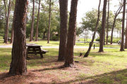Campsite with a picnic table, amongst the slash pines.