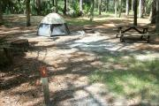 Primitive campsite with picnic table and ground grill. A small tent is in the site, not included.