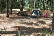 Primitive campsite with picnic table and ground grill. A blue tent and two lawn chairs are in the site, not included.